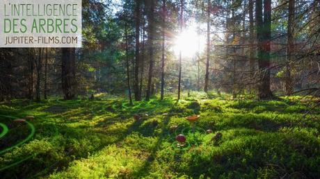5X1 places à gagner pour le film l'Intelligence des arbres