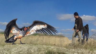 Découverte d'un condor préhistorique en Province de Buenos Aires [Actu]