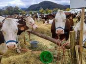 retour comice agricole Ornans…!