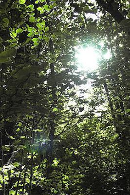 La forêt, un univers féerique à explorer