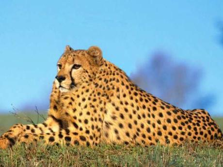Retouche insolite : 8 animaux loufoques