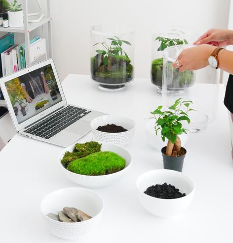YAMAYAMA le terrarium en kit pour votre intérieur