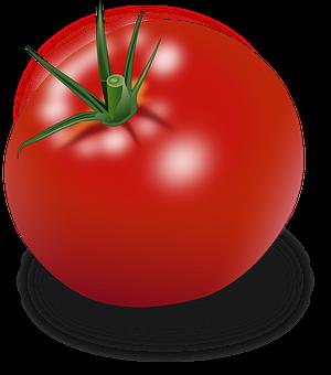Les tomates (suite et fin)