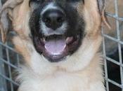 ARKO beau bébé croisé mastin mois adopter chez chiens galgos