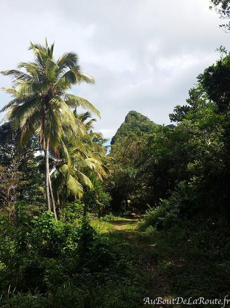 Dominique, janvier 2017