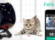 Felik, jouet intelligent pour chat