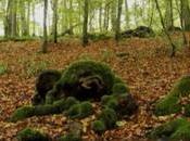 monde secret arbres, vidéo