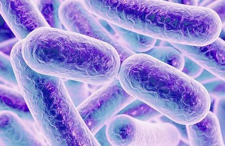 RISQUE CARDIAQUE : Des bactéries buccales en cause dans l'athérosclérose