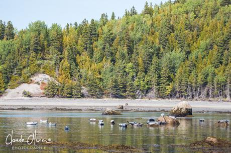 Voyage au Canada 1ère étape: Du parc du Bic, en passant par Bonaventure jusqu'à Percé.