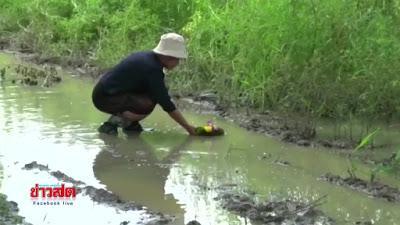 Mae Rim/ Chiang mai, le Loy Krathon de la colére (vidéo)