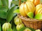 Est-ce Garcinia Cambogia agit aussi comme coupe faim efficace?