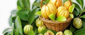 Est-ce que Garcinia Cambogia agit aussi comme un coupe faim efficace?