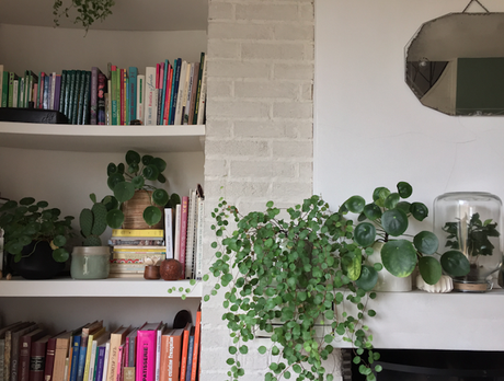 Urban Jungle bloggers  // Plants & words