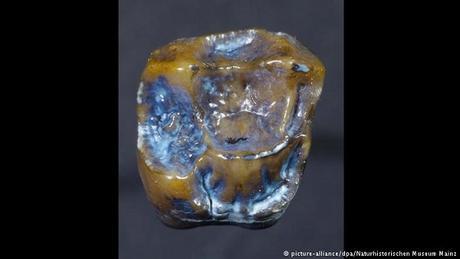 La découverte de dents fossilisées en Allemagne pourrait réécrire l'histoire de l'homme