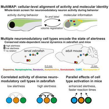 #cell #cerveau #neuromodulation Circuits ancestraux pour une modulation coordonnée des données relatives au cerveau
