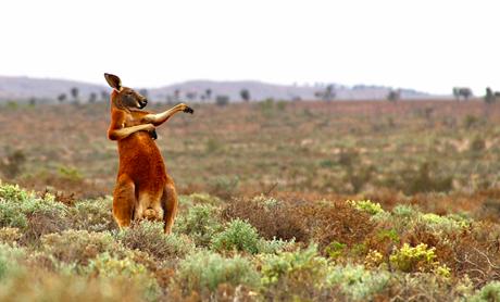 Le concours de la photo animale la plus amusante de 2017 a ses finalistes