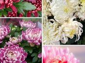fleurs mois novembre