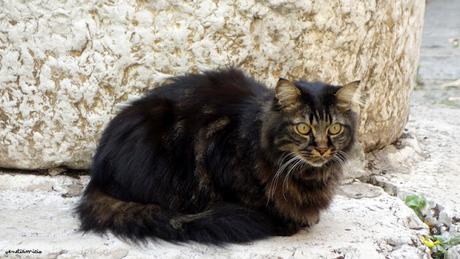 Les chats de Venise