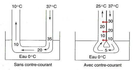 Système d'échange de chaleur à contre-courant