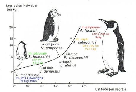 Forme des espèces de manchots en fonction de leur répartition géographique