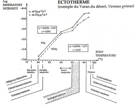 Thermorégulation d'un ectotherme (Varan du désert ici)