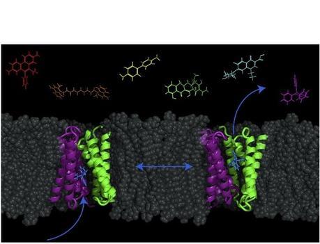 ANTIBIOTIQUES : Les livrer aux bactéries en détournant les transporteurs cellulaires