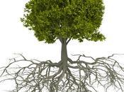 L'intelligence arbres (vidéo)