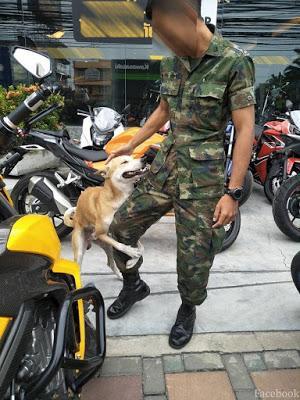 L'armée Thaïlandaise, secourisme et domination canine (vidéo)