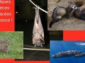 Alerte biodiversité plus espèces animales sont menacées d'extinction