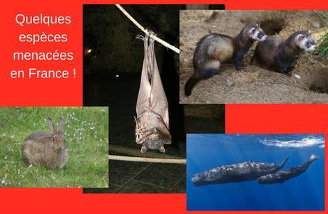 Alerte sur la biodiversité : plus de 30 % des espèces animales sont menacées d'extinction !