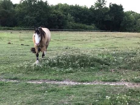 Une page Facebook pour mon Hermits de poney !