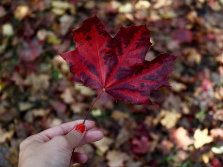Un bout d'automne