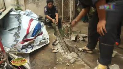Un sauvetage hors normes de python en Thaïlande (vidéo)