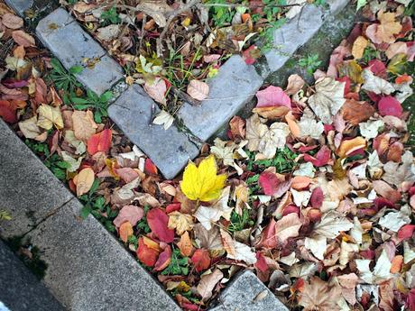 Collection de feuilles [journal 9]
