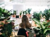 Productivité bien-être travail grâce plantes