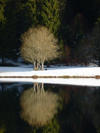 blog littéraire de christian cottet-emard,carnet photo,lac genin,promenade,nature,campagne,forêt,lac glaciaire,christian cottet-emard,saison,tour du lac