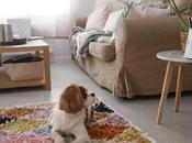Dog: teste Furbo Camera Mega plan