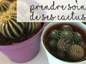 Comment bien entretenir cactus
