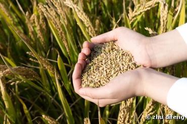 Le nouveau règlement de l'agriculture biologique libère les semences