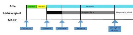 Merode Thomas Aquin schema