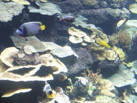 aquarium-paris-8
