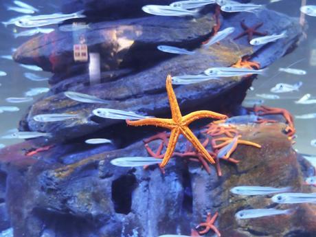 aquarium-paris-7