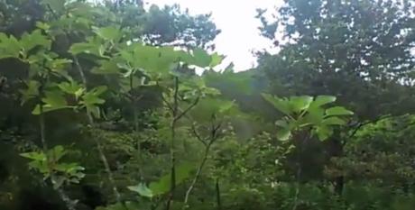 Visite d'une forêt-jardin dans les Cevennes