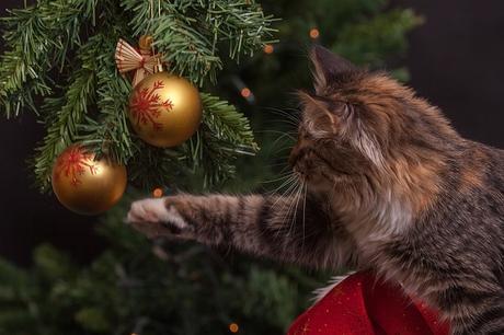 Abécédaire 24 : mon beau sapin de Noël