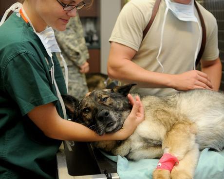 Vétérinaires, le site en cas d'urgence