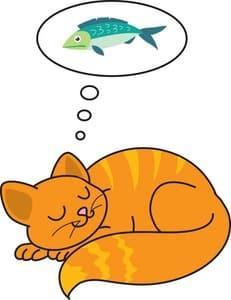 Conseils sur le sommeil du chat et rêve t – il ?