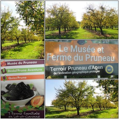 Automne dans le Lot-et-Garonne 5