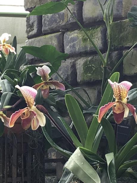 Au coeur de l'hiver, les vivants du Jardin botanique