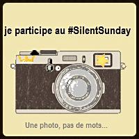 Silent Sunday 2017 #34