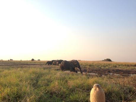 Namibia – Chobe #2